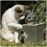 Reading Cat2