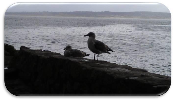 California Birds2